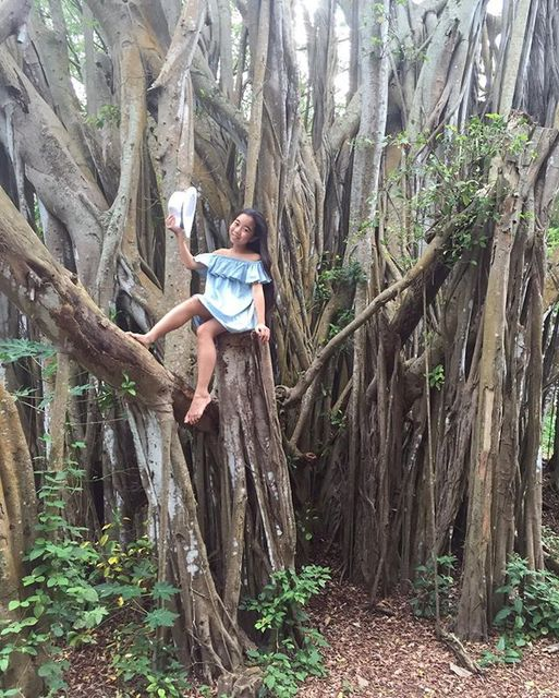 On the big banyan tree in t...